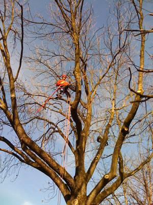 Baumpflege  Baumpflege Joris Felenda | Baumpflege Starnberg · Baumpflege ...